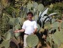 Yucca aloifolia - kolekce semen