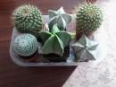 Prodej Kaktusů