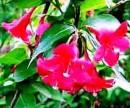Barevný kvetoucí živý plot 12 kusů, 360 + poštovné
