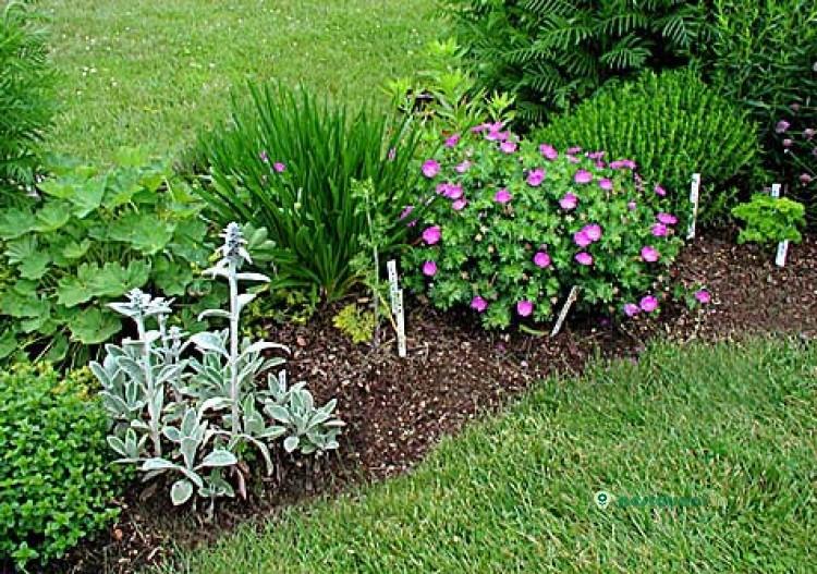 Мой сад и огород своими руками фото
