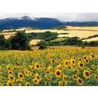 Tapety a wallpapery na motivy přírody a pěstování