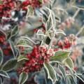 Leden - pěstitelský kalendář