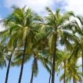 Palmy, nejen v tropech