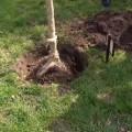 S�zen� ovocn�ch stromk�